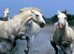 caballos-300x219